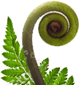 fern sustainable practices straynz