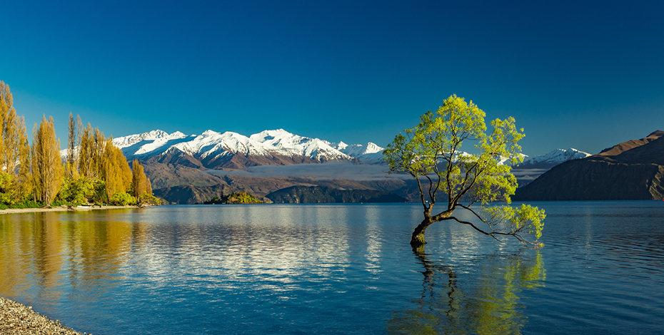 Wanaka tree Highlights 930x470