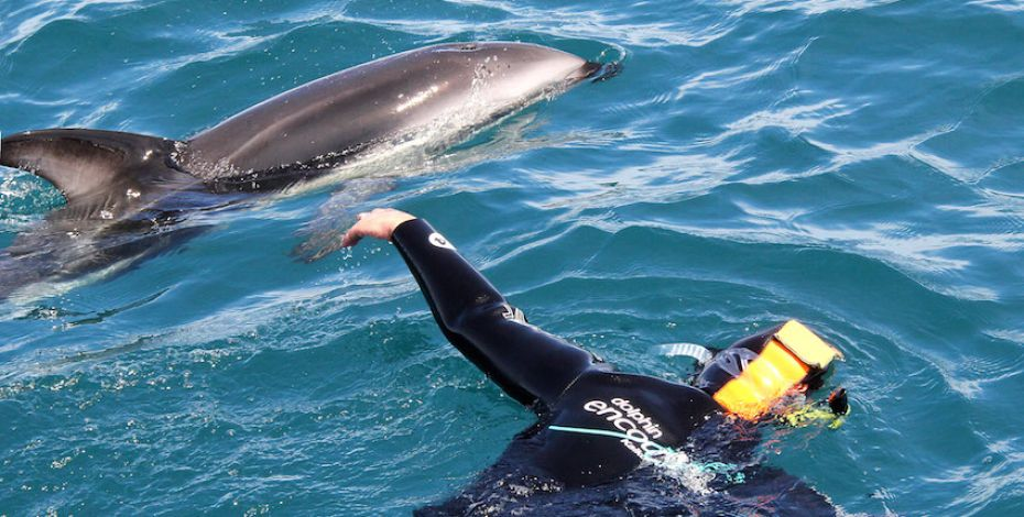 Kaikoura dolphin encounter Swimming